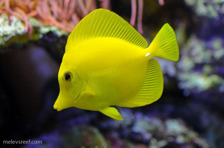 Pin On Fish T