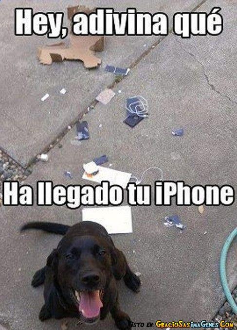 Memes En Espanol Buscar Con Google Imagenes Divertidas De Animales Humor Divertido Sobre Animales Chistes De Perros