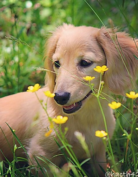 Pin By Beth Williams Baker On Doxies Extra Cute Ones Dachshund