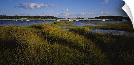 Tall grass on the beach, Littleneck Beach, Ipswich, Cape Ann, Massachusetts