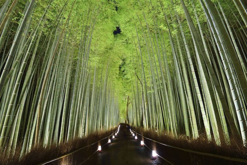 Forest Wallpaper for Room Bamboo Forest Wallpaper and Wall Mural