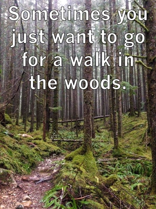 Sometimes you just want to go for a walk in the woods - moosefish.com