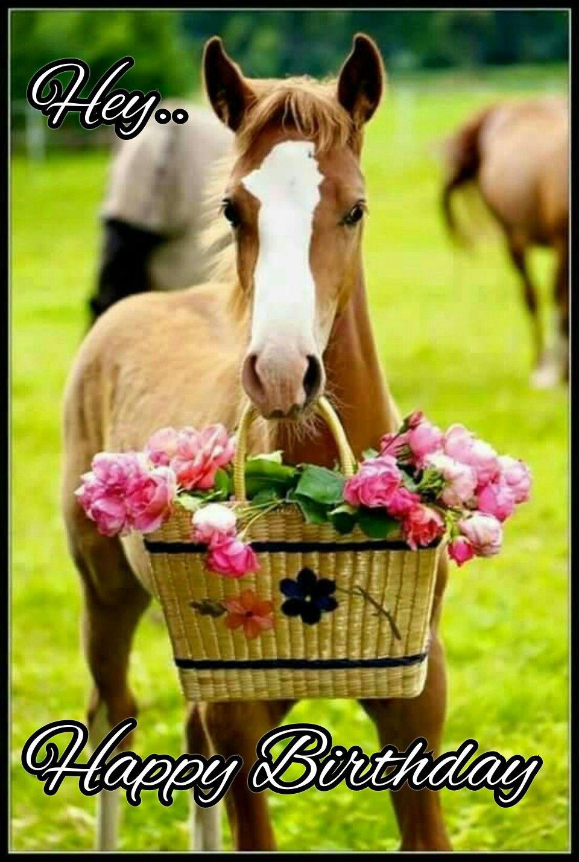Gluckwunsche Zum Geburtstag Pferd Marianiadiana Web