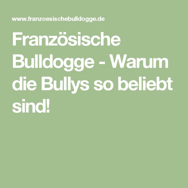 Französische Bulldogge Warum die Bullys so beliebt sind