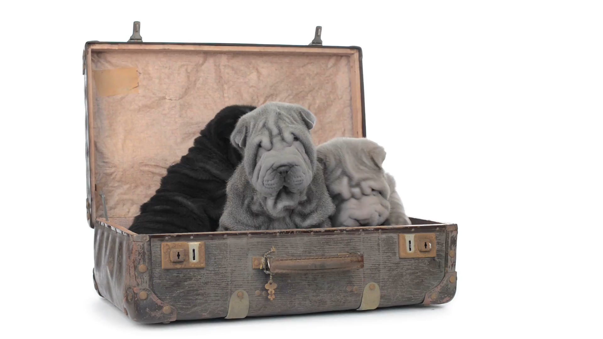 Dog, Cat and Other Pet Friendly Hotels at