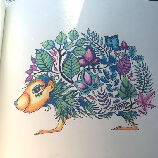 Hedgehog Enchanted Forest Johanna Basford Coloring Book Enchanted Forest Basford Coloring