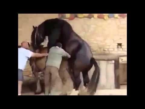 Секс с конем ю туб