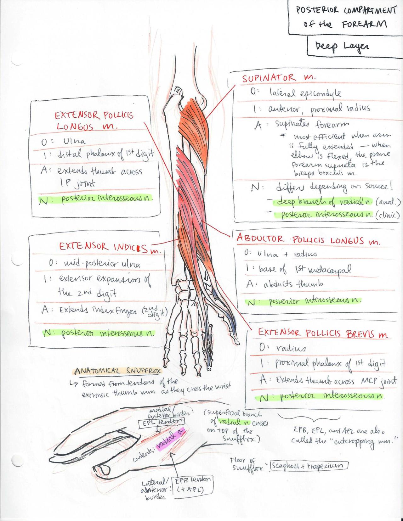 minuiko: Forearm - The Oxford Handbook of Medblr   Study Power ...