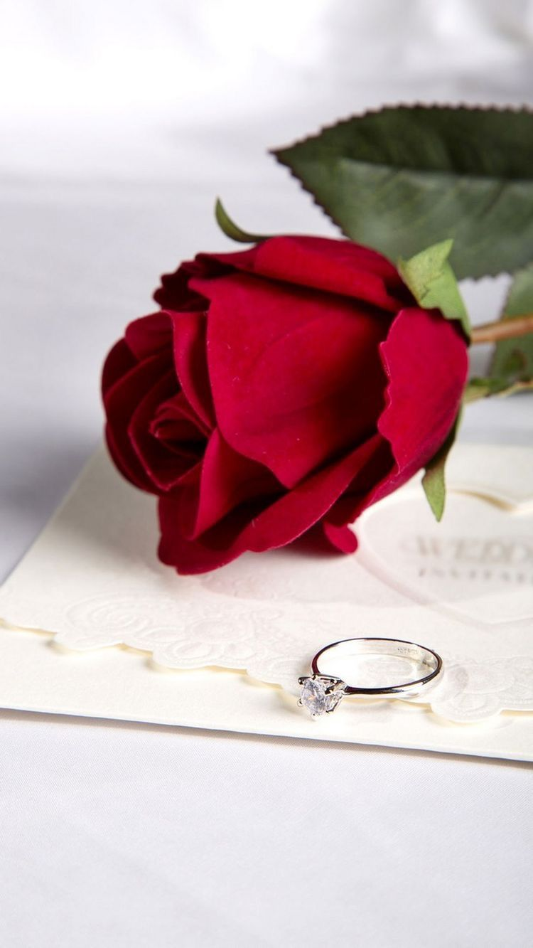 Only For You My Love Love Rose Flower Beautiful Red Roses Beautiful Roses