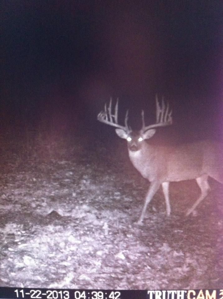 Funny Trail Cam Pictures : funny, trail, pictures, Trail, Photos