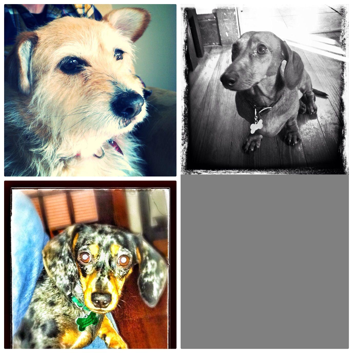 Annie, Chili Dog, Pickel