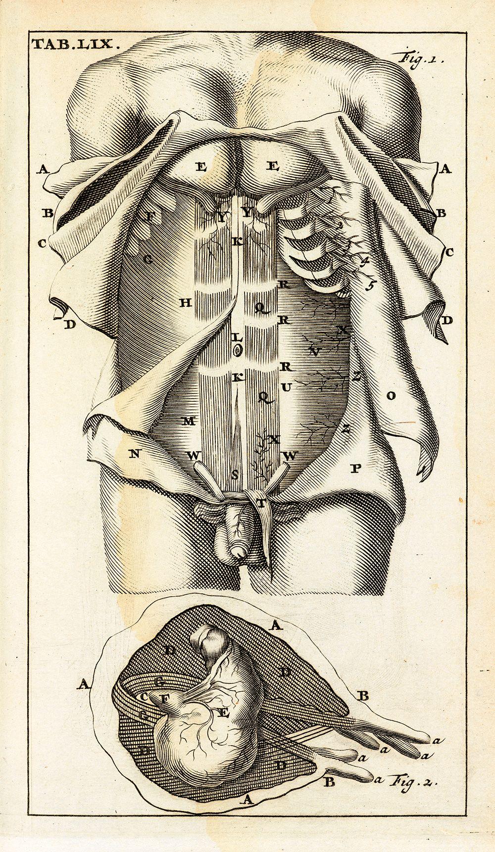 Anatomia Reformata, Tab LIX,\