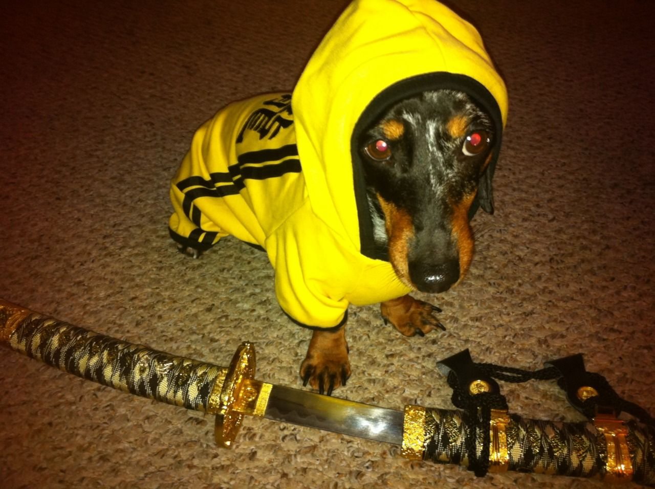 Kill Bill More Like Castrate Lou Puppy Dog Pictures Puppies And Kitties Dogs