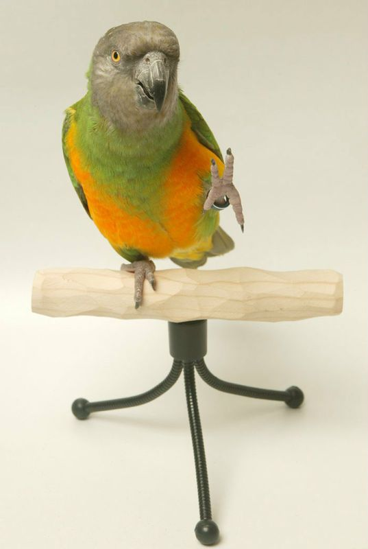 Easy Carry Shower Perch Stand Rod Suction Cup for Small Medium Large Parrot