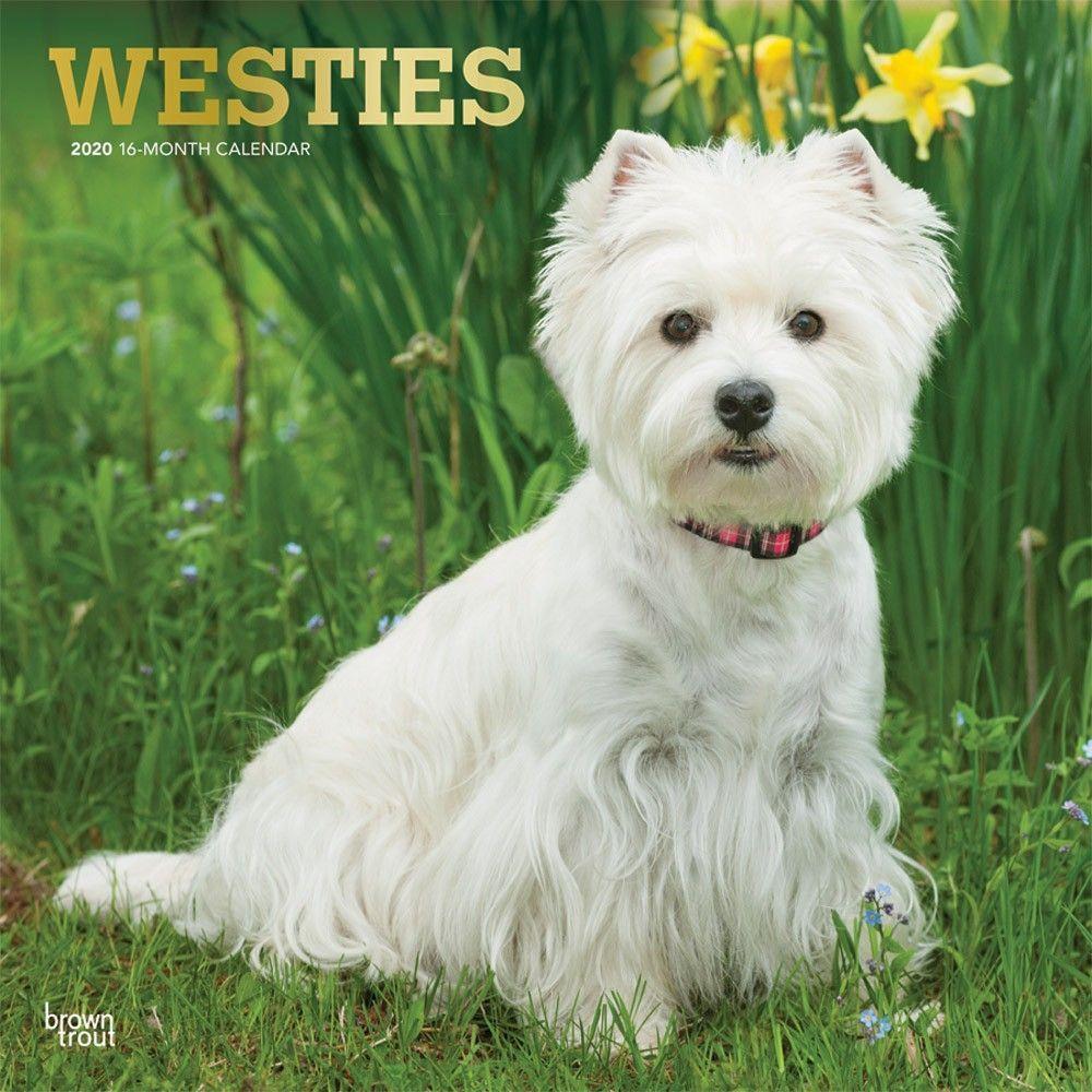 West Highland Terriers Wall Calendar West Highland Terrier West Highland White Terrier Highlands Terrier