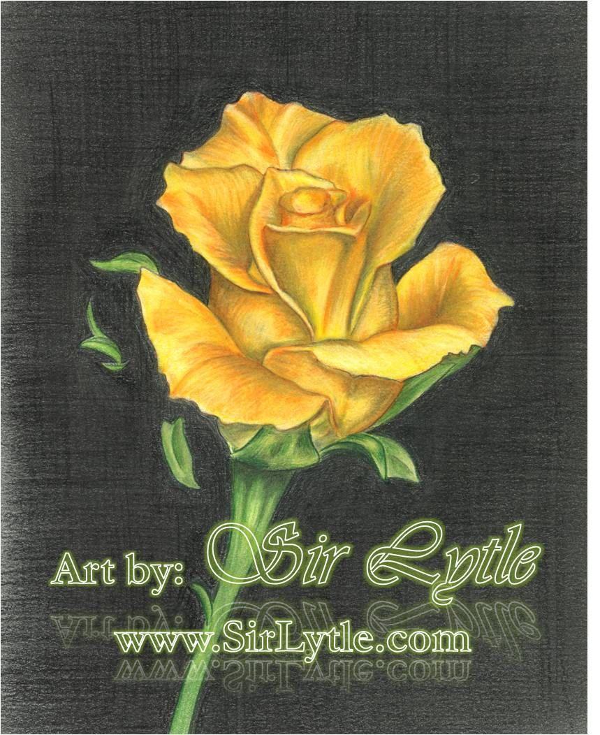 Rose Drawings In Pencil Yellow Rose Colored Pencil
