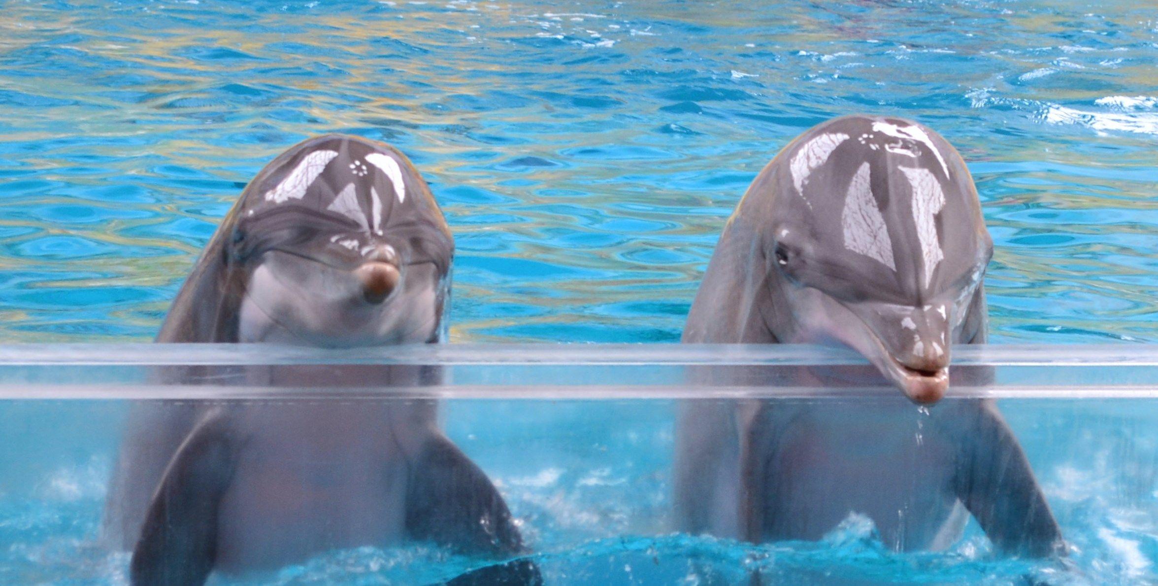 Dolfinarium Brugge Dolfijnen Zeeleeuwen Foto S
