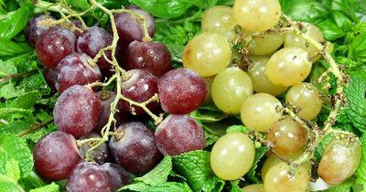 Las semillas de las uvas son pequeñas, pero están llenas de nutrientes concentrados. Es perfectamente seguro comerlas, y es más, comerlas regularmente puede ser un adicional sano ...