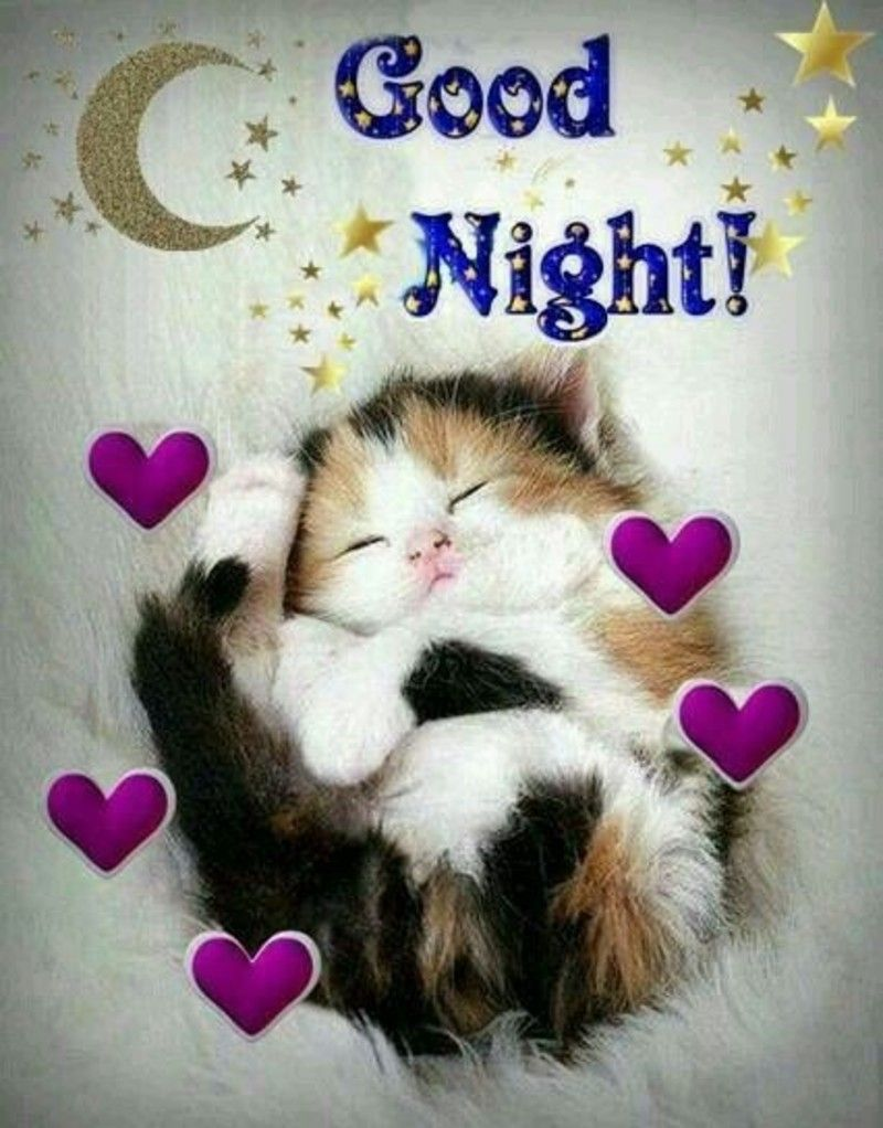 Quotes For Whatsapp Dogs Cats Animals Good Night 98453 Good Night Cat Good Night Image Good Night Sister