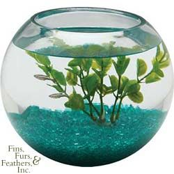 Crystal clear 1 2 gallon glass fish bowl perfect for for 2 gallon fish bowl