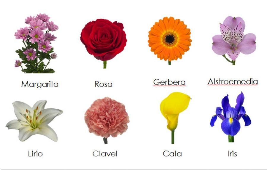 Pin de sergio rufo en flores pinterest flores y invitaciones - Todo tipo de plantas con sus nombres ...
