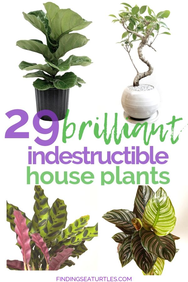 29 Easy Houseplants to Beat the Winter Blues! - Finding Sea Turtles