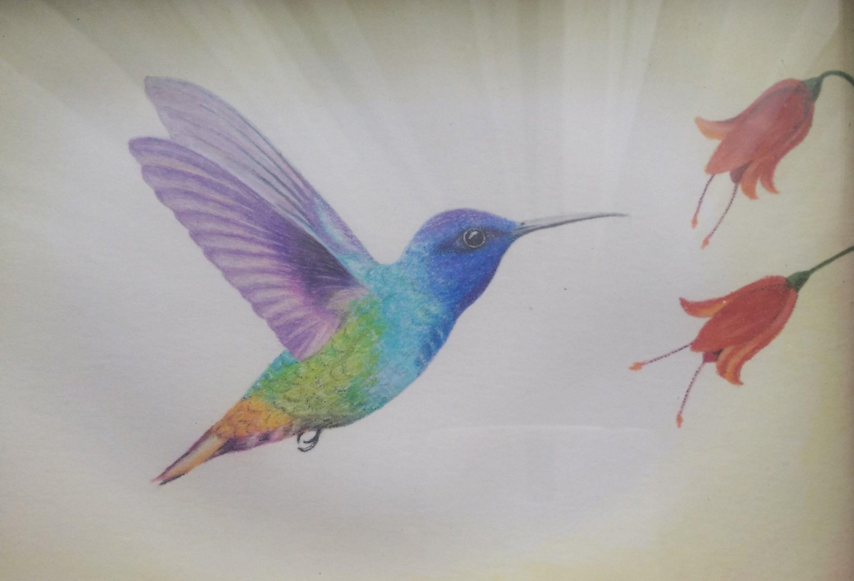 Colibri Pintado Con Colores Bird Feathers Diy Shoes Birds
