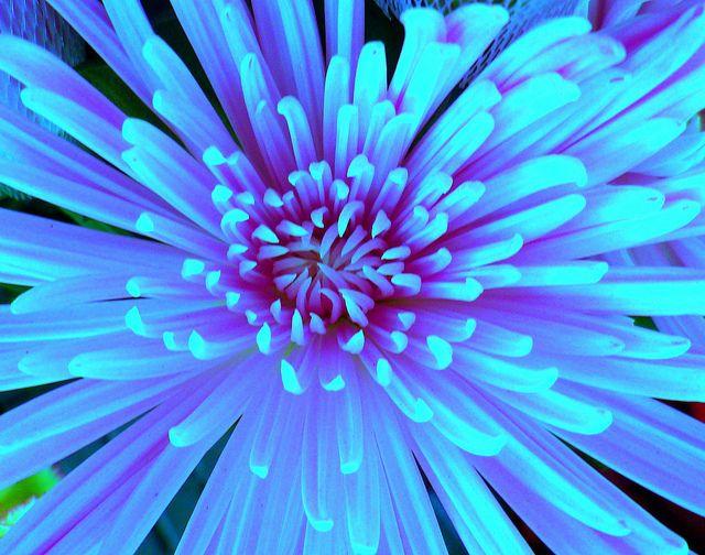 Neon Blue Flower Neon Flowers Aqua Art Flower Art