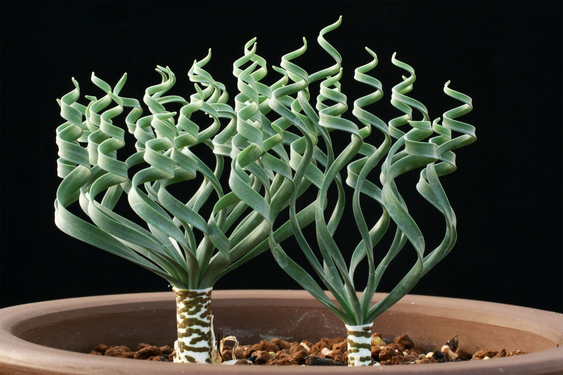 All things succulent! | Succulents | Planting succulents ...