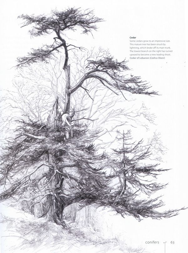 tree drawing black and white Google Search Landscape