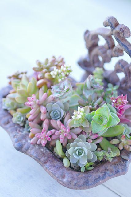 Succulents in a vintage soap tray.