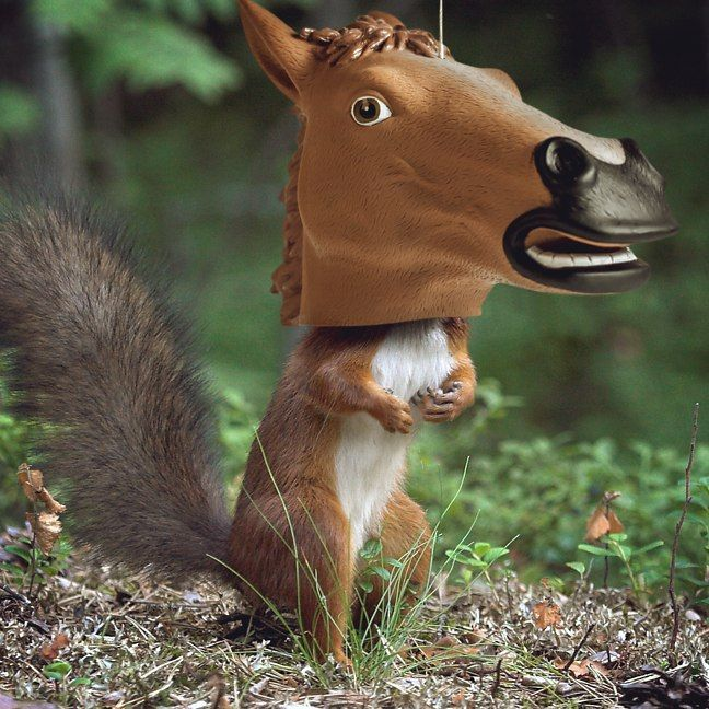 Horse Head Squirrel Feeder: Price: GBP14.99 We need to embrace the fact that squirrels routinely expect us to provide a hearty square meal,…