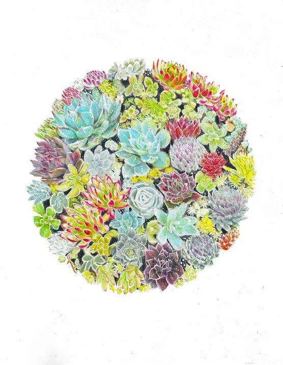 Succulent Garden Art Print 8x10 or 8x8 - Wall Decor, Kids Wall Art, Nursery Art. $13.00, via Etsy.