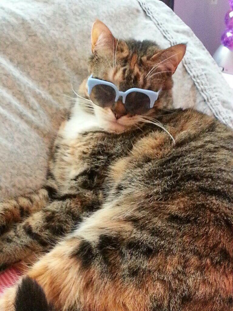 """""""Cool cat"""""""