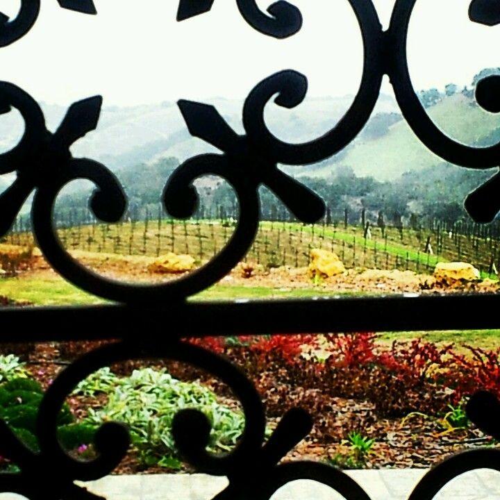 Sueb- Iron & Vines @Daou Winery