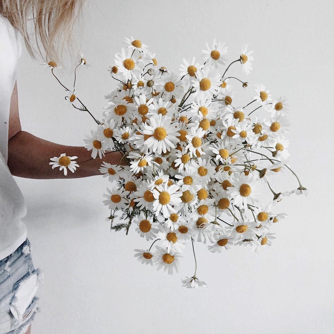 wild grown daisies
