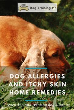 Splendid Dog Collar Necklace Dogsofinstag Dogstufftravel Dog Allergies Remedies Dog Allergies Dog Skin Allergies
