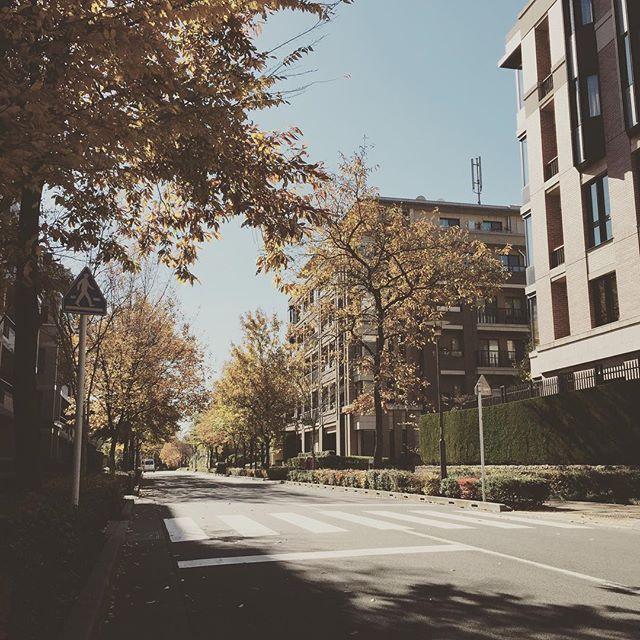 Japanese Manhattan  #luxuryapartments  #autumnleaves #autumn #fall
