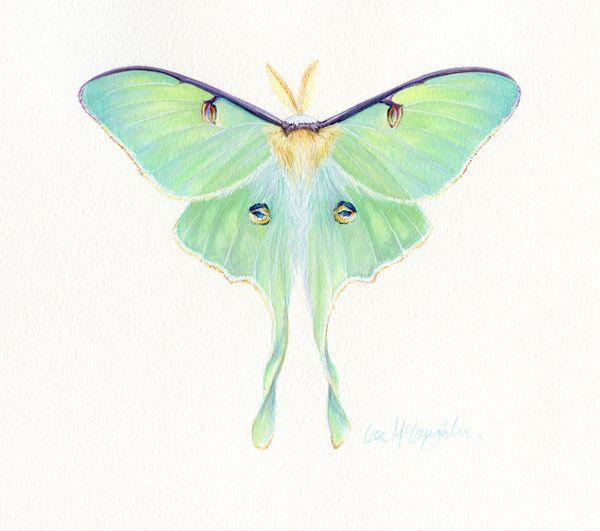 6cbe1532f Luna Moth | Bees, Butterflies & Moths | Luna moth tattoo, Moth ...