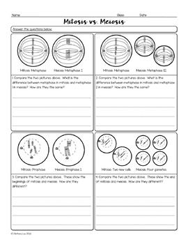 14+ Cell cycle mitosis worksheet Information
