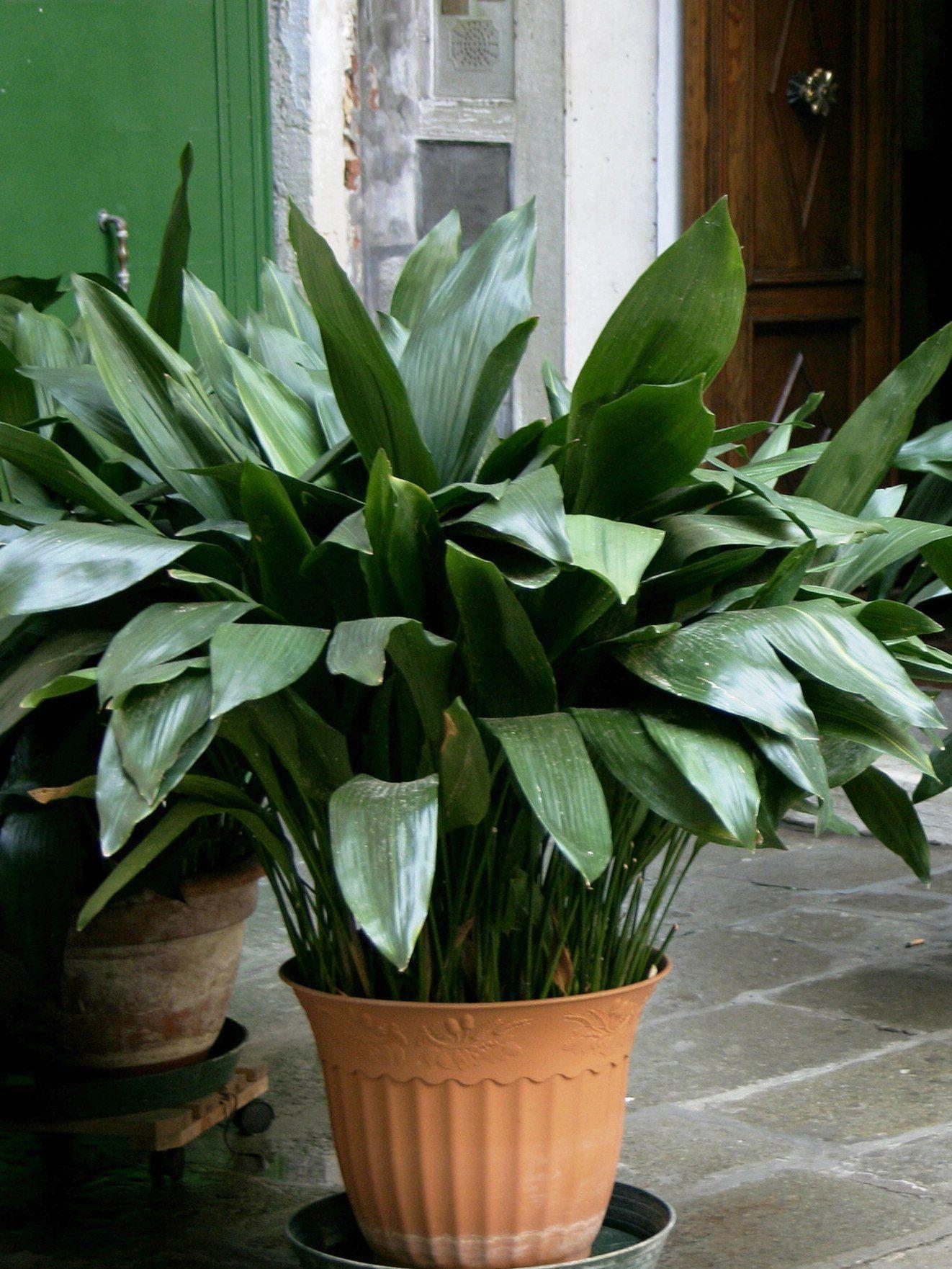 9 Houseplants You Can Totally Neglect Plantas De Follaje Jardineria Y Plantas Jardineria En Macetas