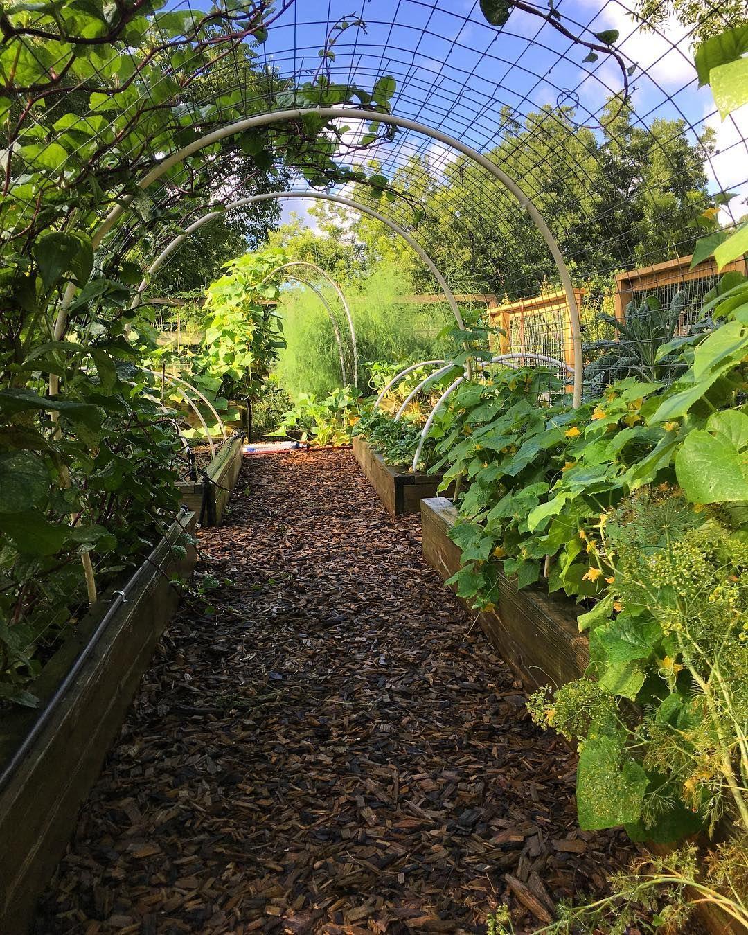 Gemüsegarten gestalten: 9 Ideen für einen hübschen Garten