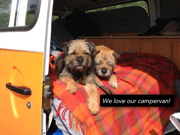 Border Joy For Border Terriers Their People Border Terrier