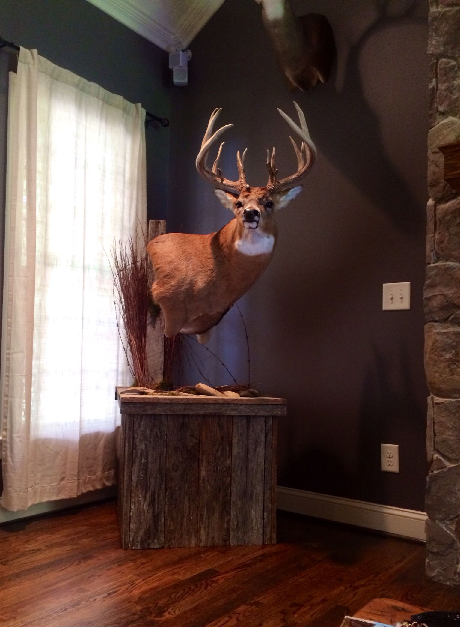 Whitetail Deer Mount The Boys Pinterest Mounts Taxidermy And Hunting