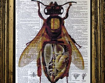 anatomy of a honey bee insect science print on old book page vintage - Prints On Old Book Pages