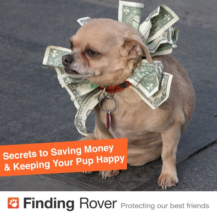 Until your pooch starts laying golden eggs, here are our top tips for saving money on dog care while still keeping your pup happy!