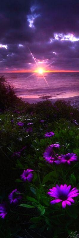 Landscape - Flowers bloom along the California coast in La Jolla. - Sun Diamond - Photography by Matt Aden                                                                                                                                                                                 Más