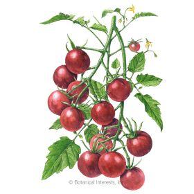 Chocolate Cherry Pole Cherry Tomato Seeds Tomato seeds