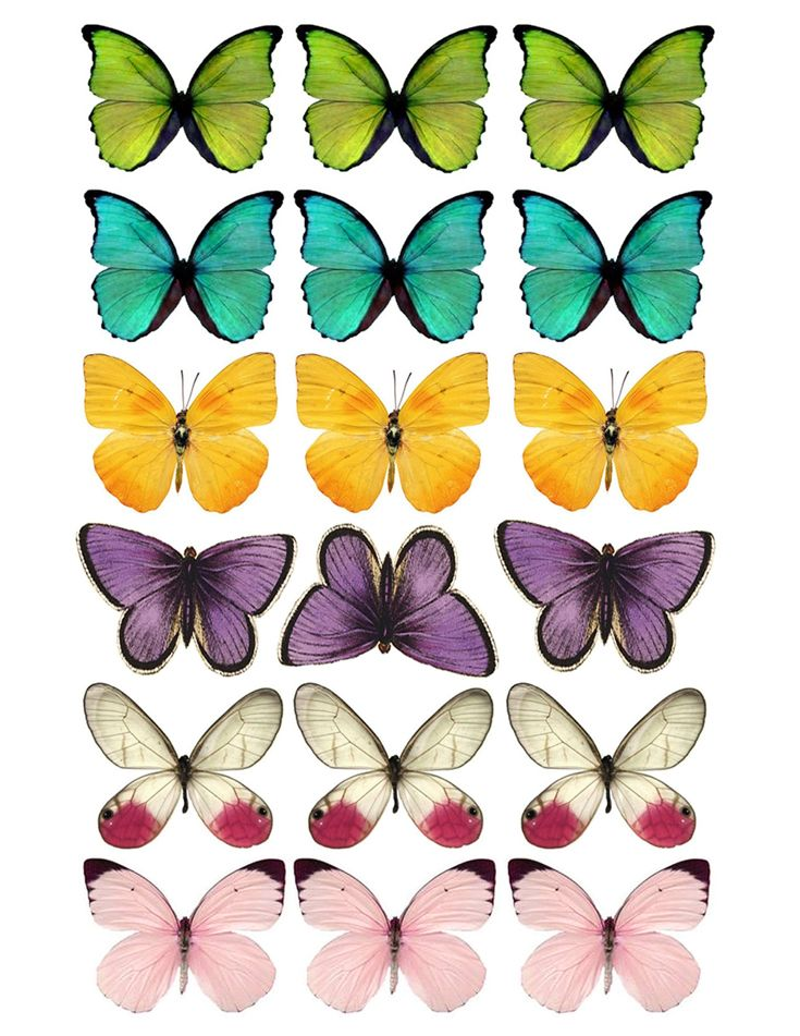 DIY Butterfly Party Favor Free Printable Butterfly