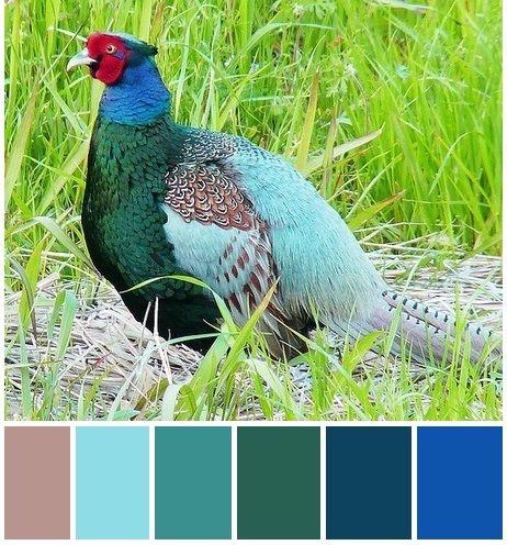 green pheasant color scheme